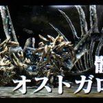 【MHX】攻略プレイ記 集★3編FINAL「双頭の骸」VSオストガロア【モンハンクロス】