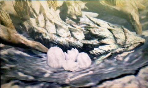 リオレイアと卵3