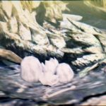 【MH4】ハンマー攻略プレイ日記 村クエスト番外編 秘密の卵運搬制覇への道